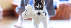 Pet Toys coupons